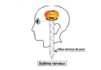 syst-nerveux.jpg